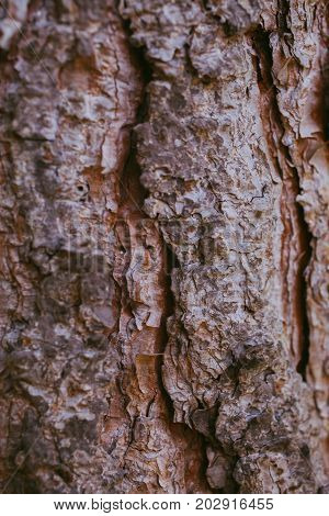 Pine tree bark background. Bark tree texture. Abstract texture and background for graphic design. Organic texture. Rough abstract texture. Natural pattern. Macro view of pine tree bark textured.