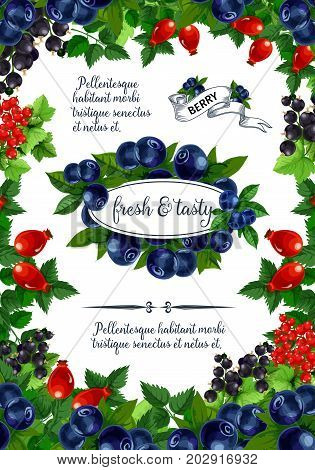 Berries poster for fruit shop or dessert market. Vector blueberry, briar or bramble and strawberry, forest raspberry or blackberry and cranberry, garden cherry and organic red currant and blackcurrant