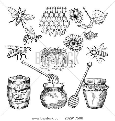 Vector hand drawn pictures of honey products. Illustration of honey healthy natural food