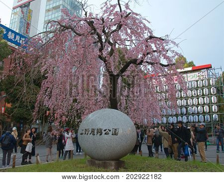 Tokyo, Japan- May 2017: People enjoying the Cherry Blossom Festival at Ueno Park in Tokyo