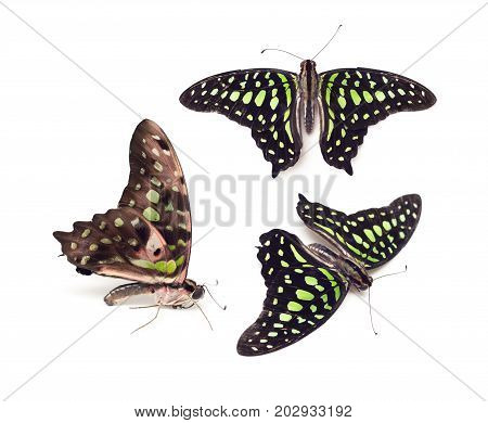 Three Green Butterflies On A White Background. Isolated.