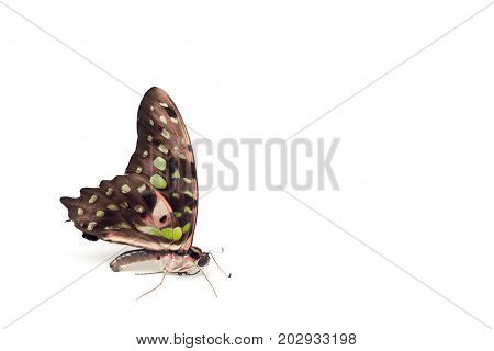 Butterfly On A White Background. Isolated.