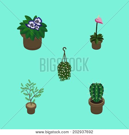 Isometric Flower Set Of Grower, Flowerpot, Peyote And Other Vector Objects