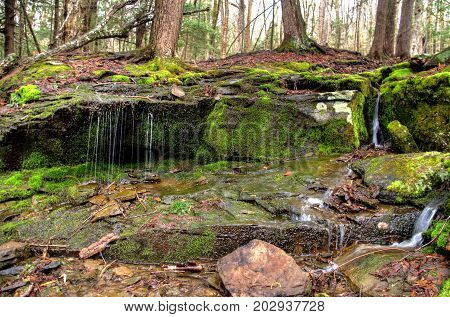 A woodland stream with water flowing over rocks in the spring