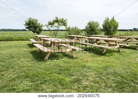 Bunch of Picnic Tables Besides a Soybean Field