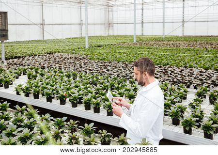 Young concentrated worker in apron holding folder and working with green plants in greenhouse