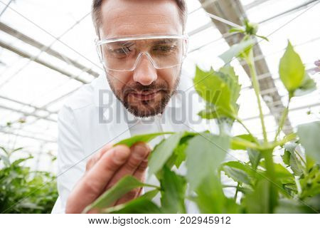 Close up of man gardener in glasses working with green plants in greenhouse