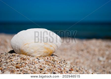 One big white beautiful oval shell on the left against a blue sea and a blue sky yellow sand beach shells summer vacation sunny day