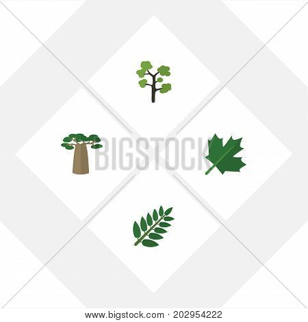Flat Icon Ecology Set Of Oaken, Baobab, Acacia Leaf And Other Vector Objects