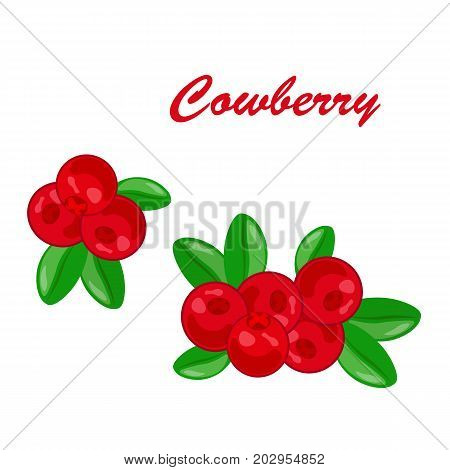 Cranberry fruit bunch cartoon icon. Ripe red berry of cranberry fruit with green branch and leaves. Organic natural food and juice label, healthy dessert, sauce recipe design