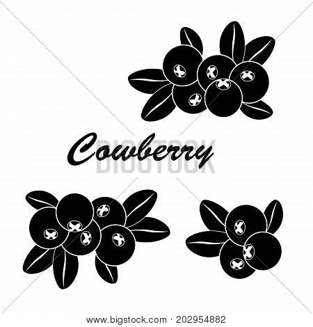 Vector illustrations of lingonberry isolated on white. Cowberry