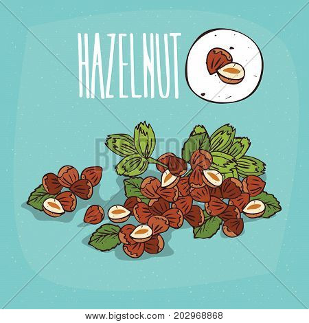 Set of isolated plant Hazelnut nuts herb with leaves Simple round icon of Hazel nuts on white background Lettering inscription Hazelnut