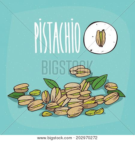 Set of isolated plant Pistachio seeds herb with leaves Simple round icon of Pistacia vera on white background Lettering inscription Pistachio