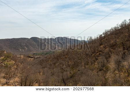 Horizontal picture of the mountains with local vegetation on the way to Jaigarh Fort in Jaipur known as pink city in India.