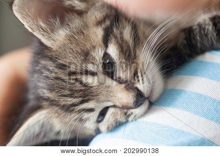 kitten slip on the shoulder of the boy outdoors.