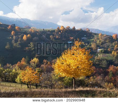Autumn landscape in mountain village. Beautiful cherry tree with yellow and orange leaves