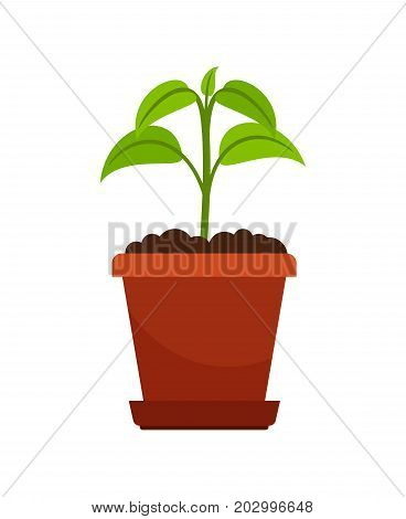 Houseplant in flower pot vector illustration. Green sprout of household plant icon on white background