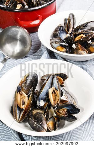freshly prepared mussels from scotland in a white bowl
