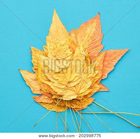 Autumn Fashion Fall Leaves Background. Vintage. Design. Yellow Fall Leaves on Blue. Trendy fashion Stylish Autumn Concept
