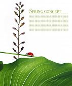 spring concept. flora and lady bug against white background. poster