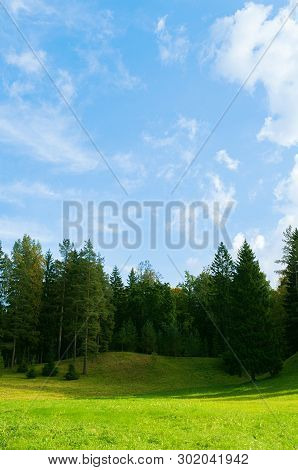 Forest spring landscape scene - dense forest trees in the valley in sunny spring weather. Forest spring nature