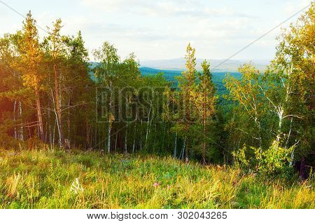 Forest fall mountain landscape - mixed forest trees on the mountain slopes under soft sunset light - mountain forest fall nature