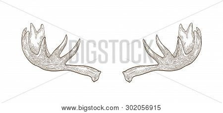 Decorative Drawing Of Elk Or Moose Palmate Antlers. Trophy Or Haul Hand Drawn With Contour Lines On