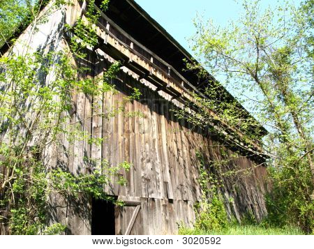 Historical Tobacco Barn