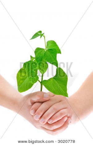 Child's Hands Holding Small Plant, Isolated On White