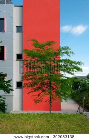 Tree In Front Of A Feature Wall On The Corner Of A Modern Building