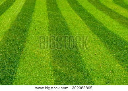 Green Grass Lawn Mowed In A Striped Pattern, Decorative Grass Pattern, Gardening And Garden Maintena