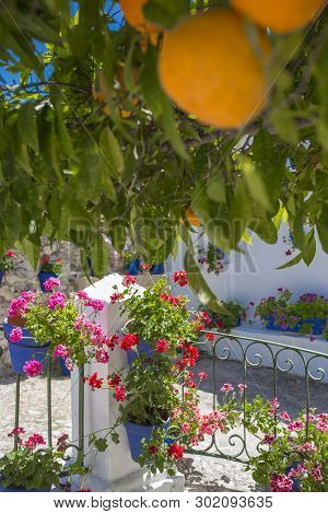 Andalusian Courtyard Under Orange Tree. Orange Tree On Typical Andalusian Architecture Background