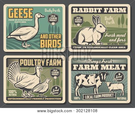 Farm Food Products, Cattle Farm Meat And Fowl Food Production. Vector Vintage Farming Butchery Poste