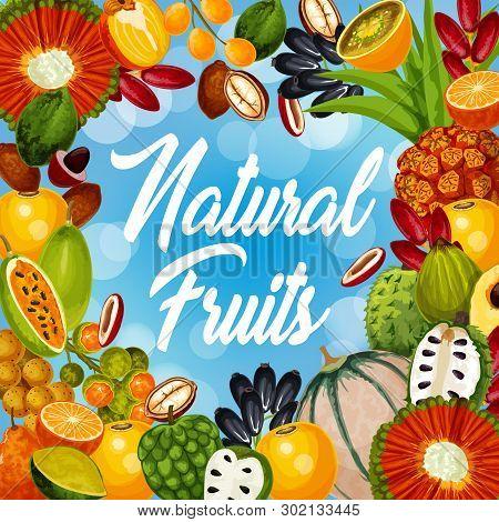 Exotic Fruits Harvest, Natural Tropical Cantaloupe Melon, Persimmon Or Pandan And Jambolan. Natural