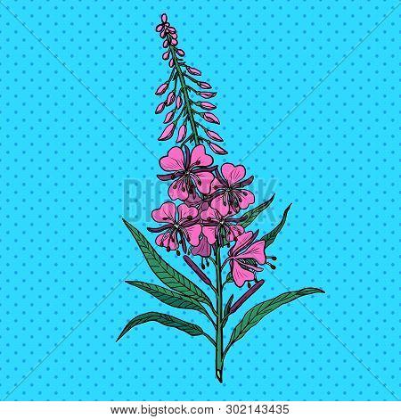 Ivan Tea Medicinal Plant. Pop Art Retro Vector Illustration Vintage Kitsch