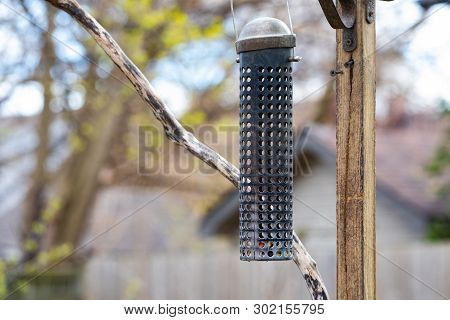 Miscallaneous Urban Bird Watching Backyard Empty Peanut Feeder