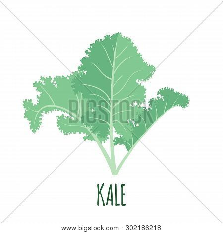 Kale Icon In Flat Style Isolated On White.