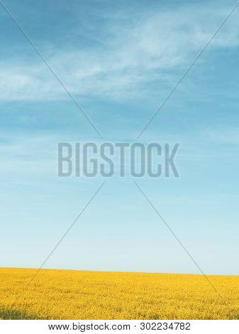 Rapeseed Yellow Field Against A Blue Sky