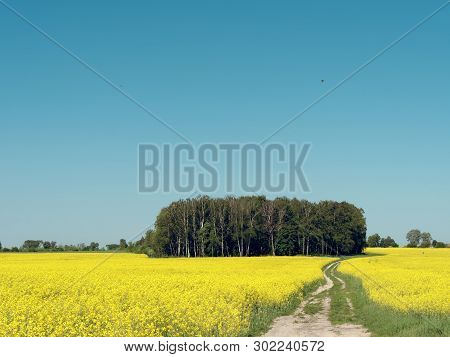 Winding Country Road Through A Yellow Rapeseed Field.