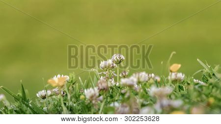 Close Up With Field Flowers In Spring.
