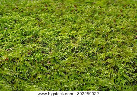 Green Moss Mosaic On The Forest Floor