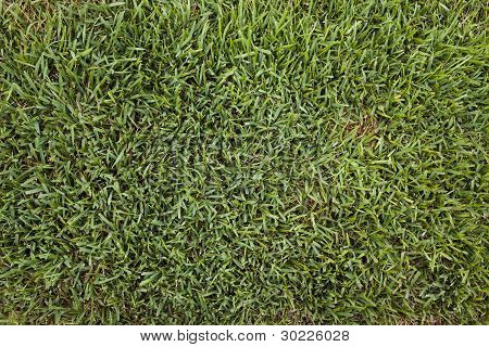 Backgrounds - Green Grass Brown Spot
