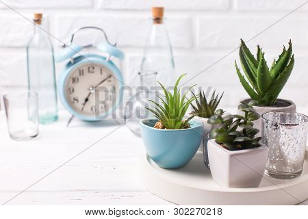 Succulents And Cactus Plants In Pots On Tray, Bottles And Blue Alarm Clock  Near By White Brick Wall
