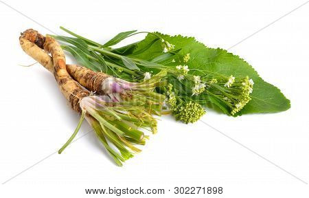 Horseradish, Armoracia Rusticana, Cochlearia Armoracia. Isolated On White Background