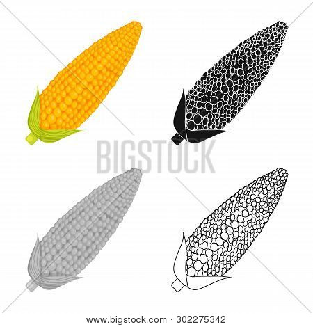 Vector Illustration Of Corn And Sweetcorn Sign. Set Of Corn And Ripe Stock Symbol For Web.