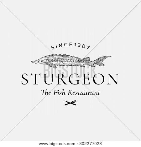 Fish Restaurant Abstract Vector Sign, Symbol Or Logo Template. Hand Drawn Sturgeon Or Beluga Fish Wi