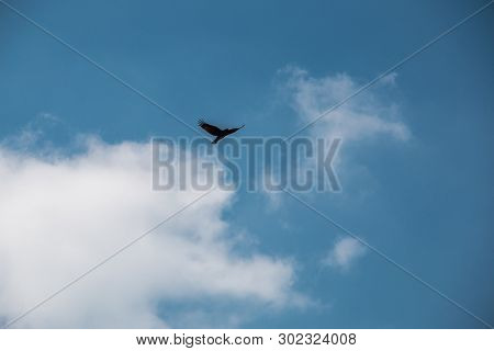Flying Bird In The Blue And Cloudy Sky