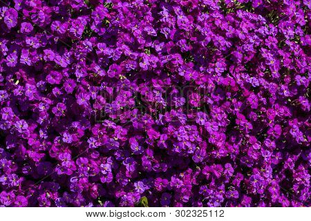 Beautiful Violet Flowers In The Colorful Garden