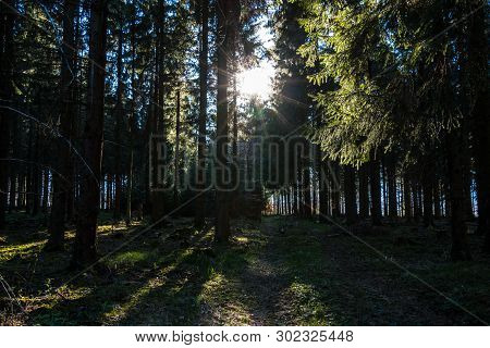 Sunrays Through The Trees Of The Dark Forest