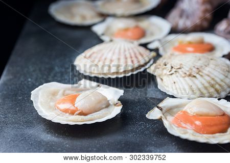 Shellfish, Raw Fresh Scallops On Black Stone Slate Background. Seafood Concepts.